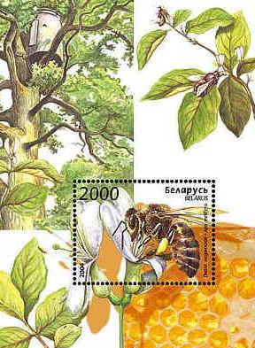 Was Ist Das Für Ein Baum philaseiten de weissrussland block 39 was ist das für ein baum